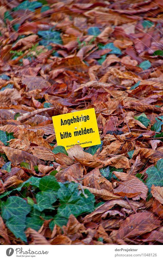 Nature Plant Leaf Landscape Environment Sadness Autumn Emotions Death Berlin Lifestyle Park Signs and labeling Tourism Signage Elements