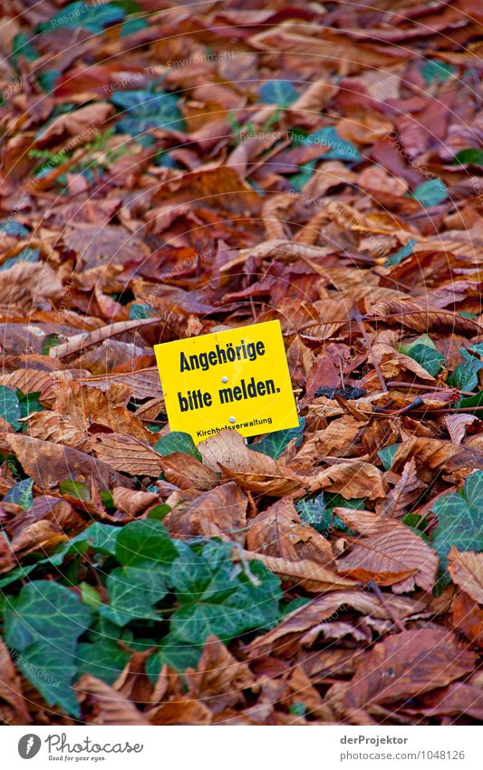 Please contact me Lifestyle Tourism Environment Nature Landscape Plant Elements Autumn Leaf Park Outskirts Overpopulated Tourist Attraction Sign