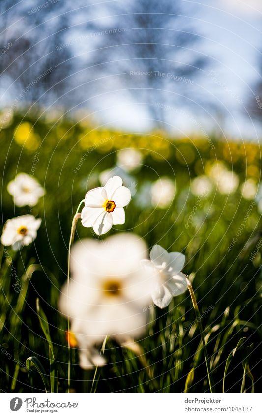 Nature Vacation & Travel Plant White Flower Landscape Joy Environment Life Spring Emotions Meadow Berlin Happy Park Tourism