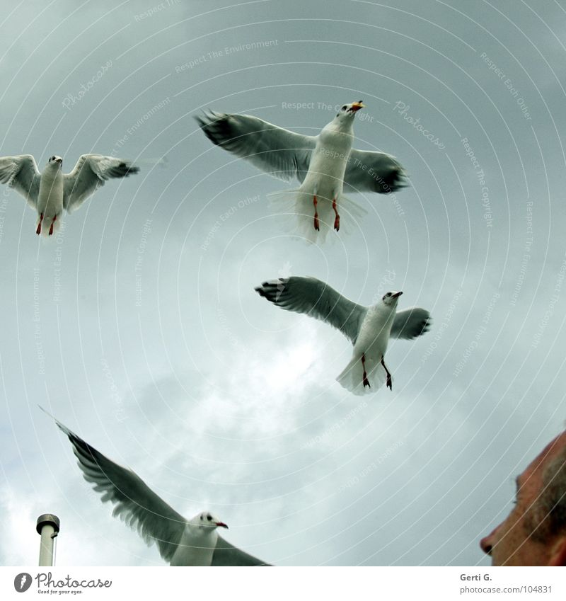 gullattack Attack Antagonism Bird Seagull Poultry Heavenly Column Flagpole Light blue Gray Dreary Clouds Bad weather Man Freckles Feeding Crumbs Catch Beak