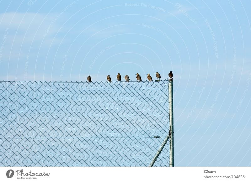 Nature Sky Blue Clouds Animal Relaxation Friendship Contentment Bird Flying Rope Sit Circle Multiple Cable Simple