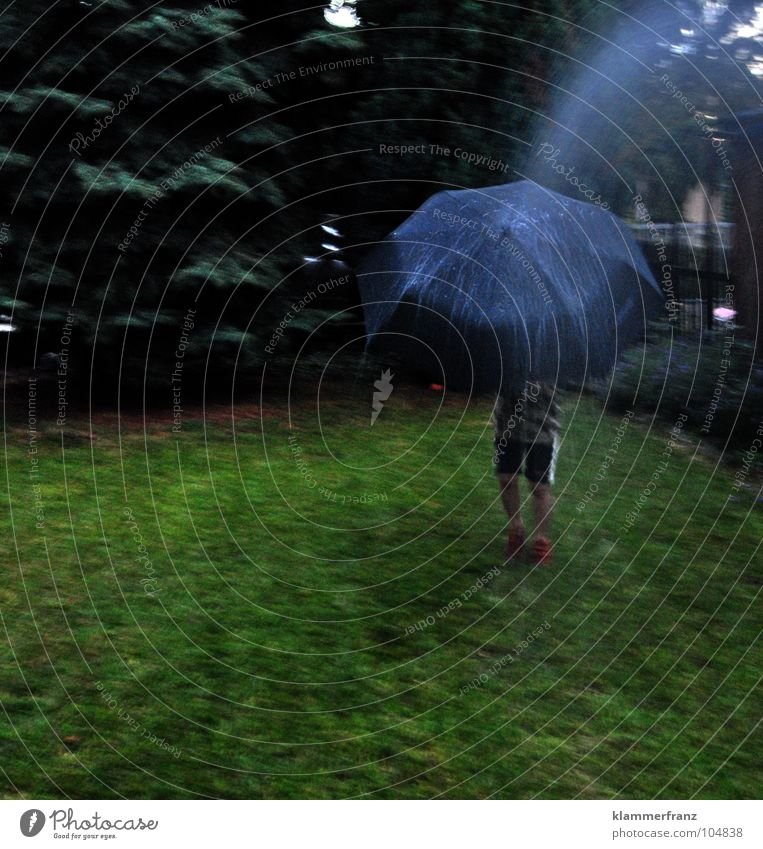 Blue Green Tree Grass Garden Rain Footwear Lawn Umbrella Young man Pants Fence Fir tree Bad weather Spruce Coniferous trees
