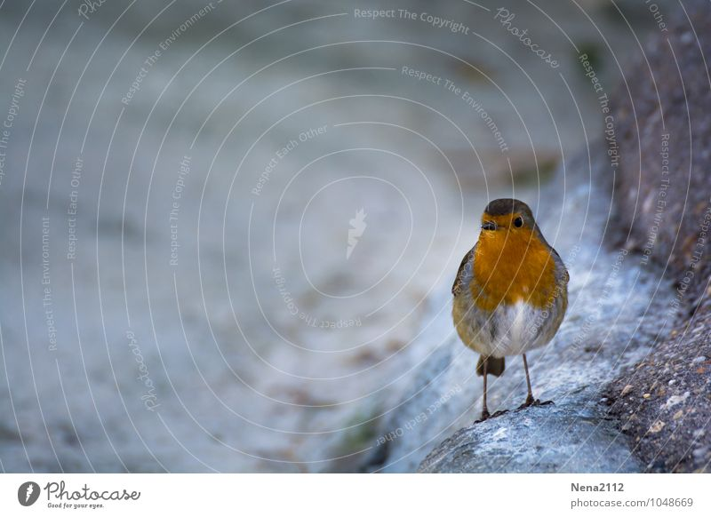 Nature Loneliness Animal Environment Gray Small Bird Air Cute Play of colours Songbirds Robin redbreast