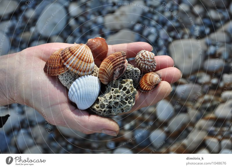 sea shells and pumice stones Harmonious Relaxation Leisure and hobbies Vacation & Travel Summer Beach Ocean Human being Hand Environment Nature Rock Coast Stone
