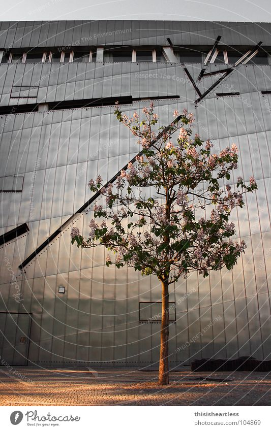 hot and cold Berlin Tree Wall (building) Metal Tin Blossom Blossoming Spring Physics Cold Gray Brown Window Grief Remember Exterior shot Wide angle