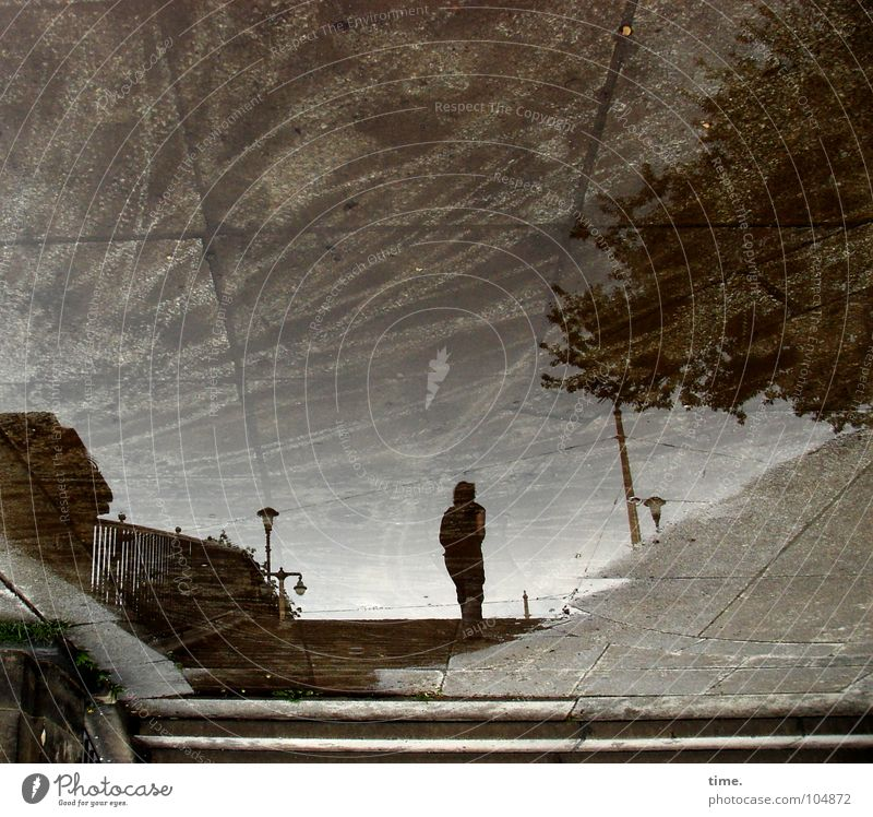 Human being Water Tree City Summer Rain Wet Concrete Stairs Bridge Gloomy Asphalt Trust Dresden Lantern