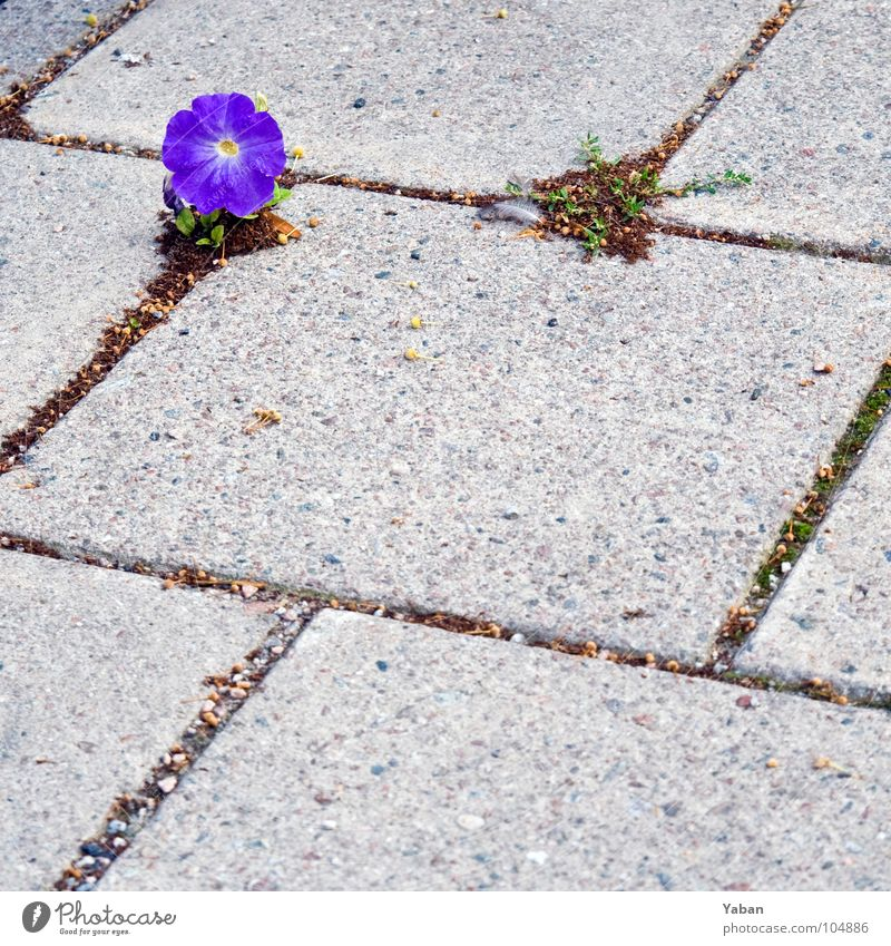 Beautiful Flower Plant Loneliness Spring Stone Power Concrete Force Ground Blossoming Botany Sweden Arrange