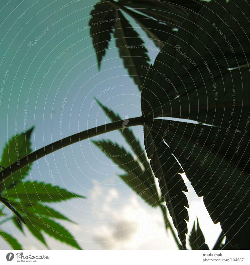 Sky Nature Plant Sun Summer Joy Leaf Clouds Meadow Life Grass Garden Power Field Dangerous Growth