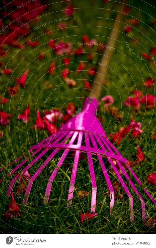 Green Plant Red Summer Work and employment Blossom Grass Spring Garden Wood Park Pink Lawn Stalk Craft (trade) Iron