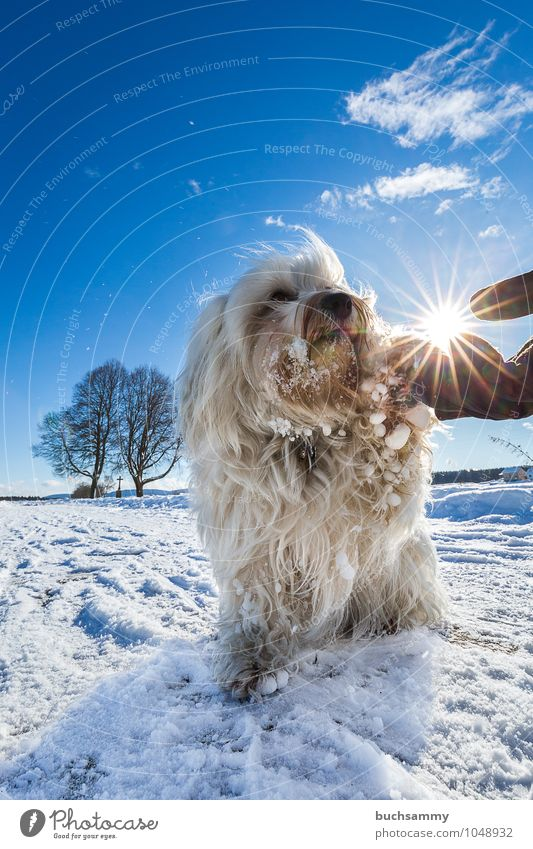 Dog Blue White Sun Tree Clouds Animal Winter Cold Small Together Friendship Sign Pelt Pet Long-haired