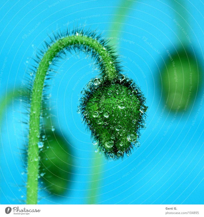 Nature Plant Blue Green Water Flower Emotions Blossom Garden Rain Drops of water Wet Broken 3 Round Clarity