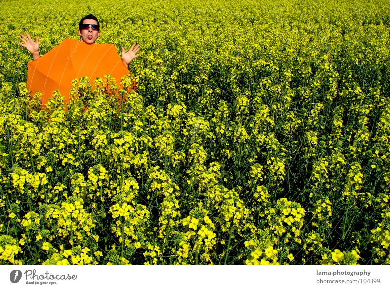Boredom in good weather To enjoy Sunbathing Calm Dream Lie Summer Canola Canola field Field Meadow Agriculture Spring Jump Ear of corn Yellow Flower Relaxation