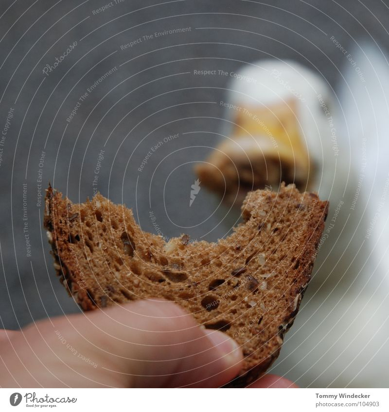 Nature White Hand Summer Animal Laughter Bird Orange Feather Trust Farm Appetite Zoo Bread Depth of field To feed