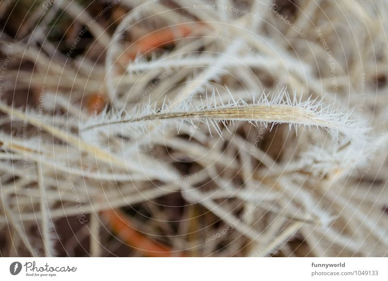 Nature Grass Death Dangerous Transience Protection Past Whimsical Evil Symmetry Shriveled Thorny Ice crystal Hoar frost Defensive
