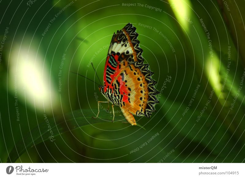 short rest of a butterfly Butterfly Relaxation Multicoloured Green Nature Virgin forest Thailand Animal Insect Break Calm Red Yellow Dark Beautiful Light