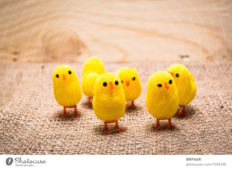 maverick Animal Chick Group of animals Together Cute Willpower Brave Agreed Love of animals Tolerant Curiosity Joy Kitsch Competition Moral Perspective Protest