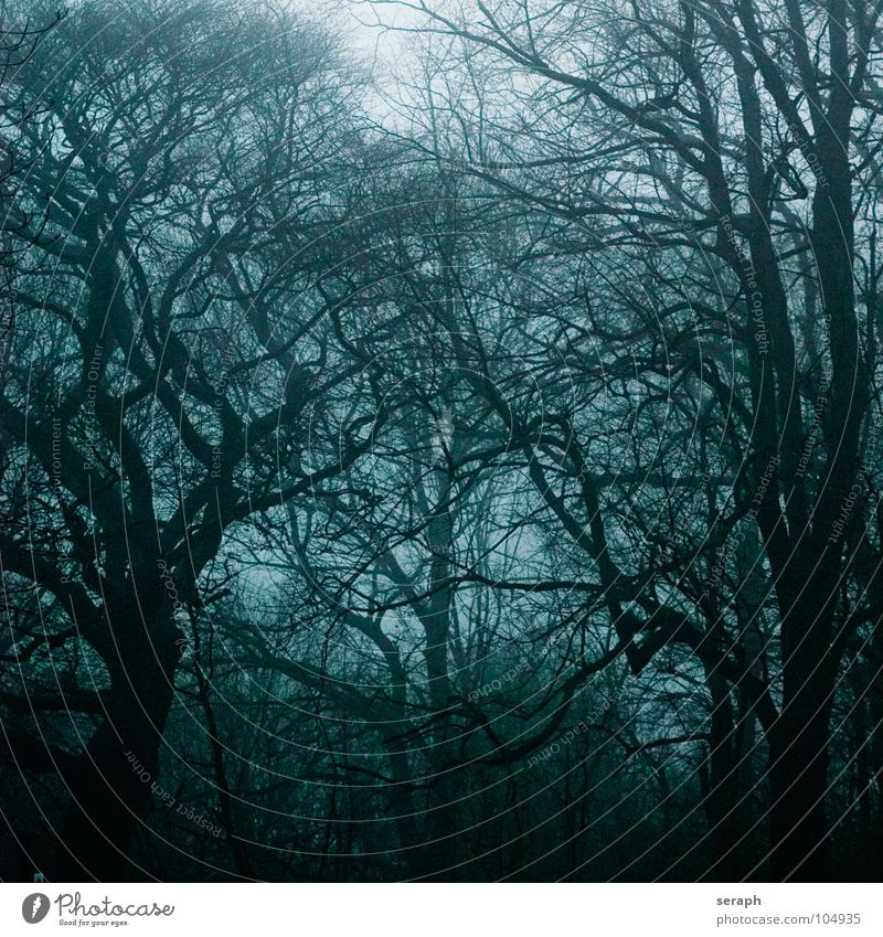Haunted Woods Nature Plant Tree Loneliness Calm Dark Forest Sadness Moody Fog Gloomy Branch Mysterious Ghosts & Spectres  Gale Fairy tale