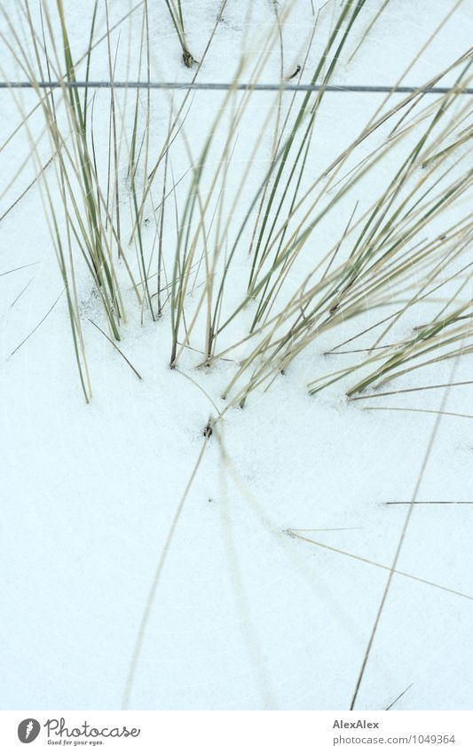 Nature Plant Green White Winter Cold Snow Grass Metal Growth Esthetic Trip Curiosity Fence Barrier Beach dune