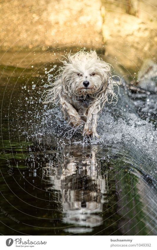 Dog Green White Water Joy Animal Black Yellow Action Drops of water Speed Pet Dynamics Excitement