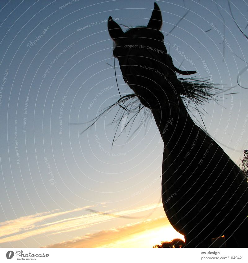 Come to where the flavour is VII Horse's bite Foliage plant Tear open Enclosure Western Sunset Glare effect Dazzle Horse sausage Meadow Flower White Green Juicy