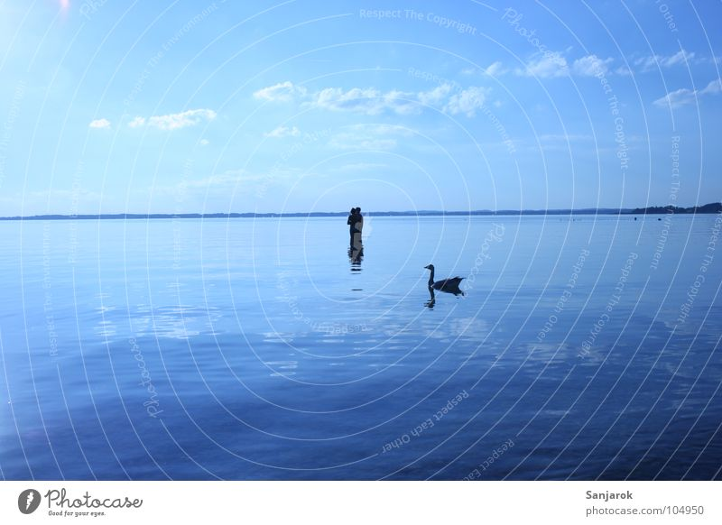 kill bird Lake Chiemsee Ocean Waves Reflection Clouds Bavaria Summer Vacation & Travel Lovers Cold Wet Swan Smoothness Wild goose Goose Bird Water Blue Coast