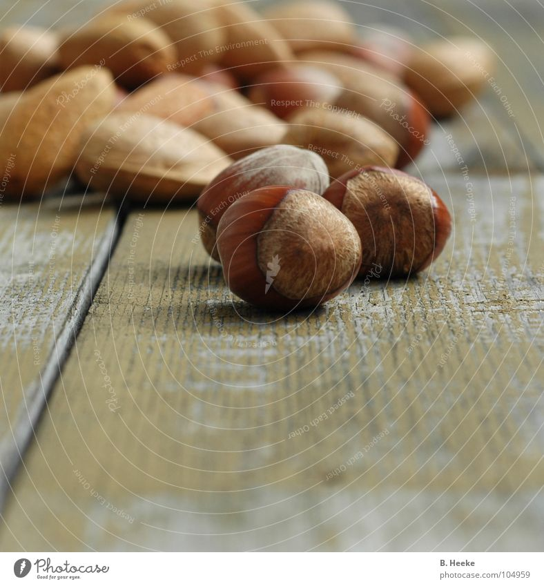Autumn Wood 3 Harvest Nut Squirrel Almond