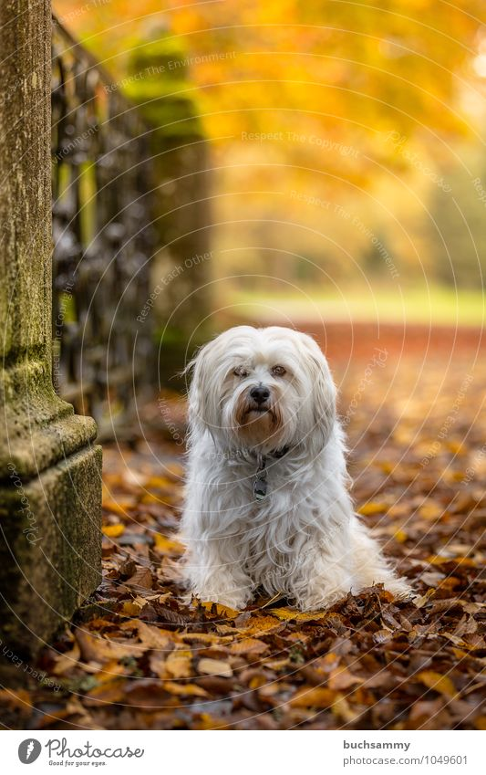 Dog Nature Plant Green White Tree Leaf Animal Yellow Autumn Small Moody Park Sit Beautiful weather Seasons