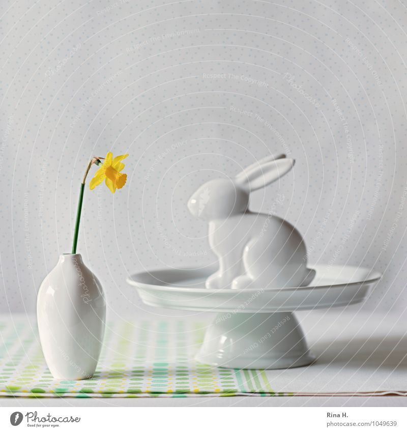 EasterStill Crockery Flower Bright Narcissus Wild daffodil Still Life Vase Hare & Rabbit & Bunny Easter Bunny Decoration Cake plate Tablecloth Square Opposite