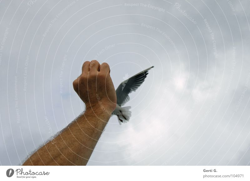 Sky Hand Joy Clouds Gray Sadness Bird Weather Flying Arm Aviation Wing To hold on Seagull Feeding Fist