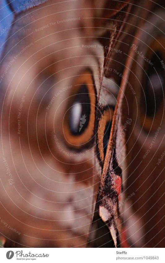 Nature Summer Brown Orange Design Esthetic Wing Circle Butterfly Inspiration Browns Noble butterfly