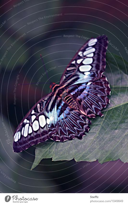 spread your wings Nature Summer Butterfly Wing Flying Blue Beginning Dark green Dark background Pattern Copy Space Colour photo Close-up Detail