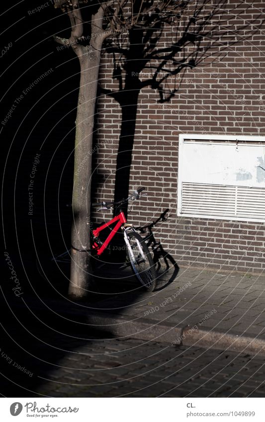 Tree Red House (Residential Structure) Wall (building) Street Lanes & trails Wall (barrier) Bicycle Transport Beautiful weather Cycling Break Traffic infrastructure Cobblestones Mobility Road traffic