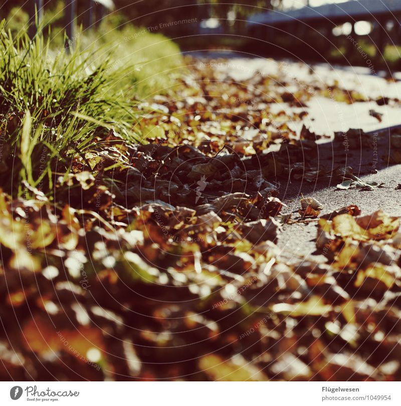 Nature Vacation & Travel Plant Tree Landscape Leaf Environment Street Autumn Movement Grass Lanes & trails Freedom Weather Bushes Climate