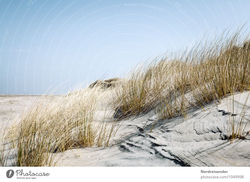 Nature Vacation & Travel Plant Summer Sun Ocean Landscape Beach Far-off places Coast Grass Background picture Sand Fresh Beautiful weather Cloudless sky