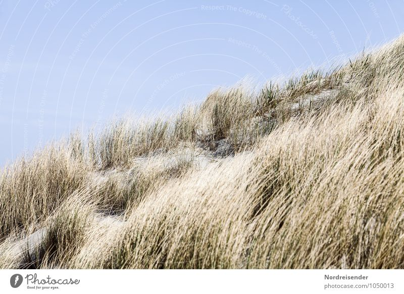 Nature Vacation & Travel Plant Summer Ocean Landscape Beach Coast Grass Sand Beautiful weather Cloudless sky Beach dune Summer vacation North Sea Maritime