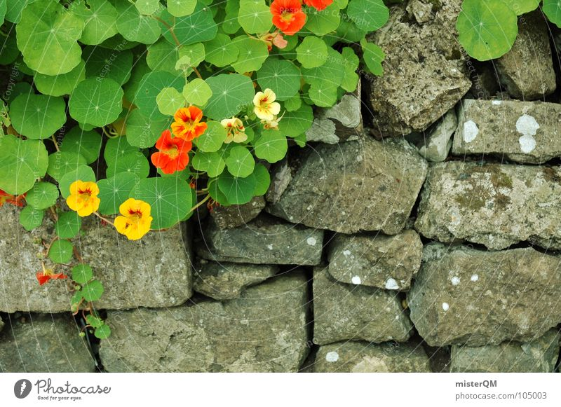 Garden of Eden? Wall (barrier) Plant Growth Herbs and spices Red Yellow Gray Border Green Flower Rock garden Wayside Shabby Beautiful Poison Dreary Bad weather
