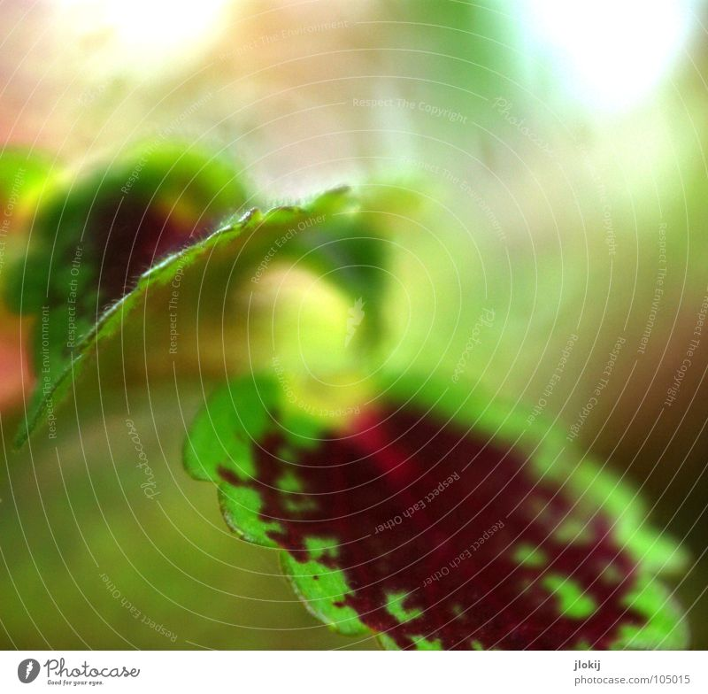 In Dragon's Garden Plant Ornamental plant Growth Blur Corner Zigzag Green Red Pattern Planning Nature Leaf Biology Background picture Movement Elegant Delicate