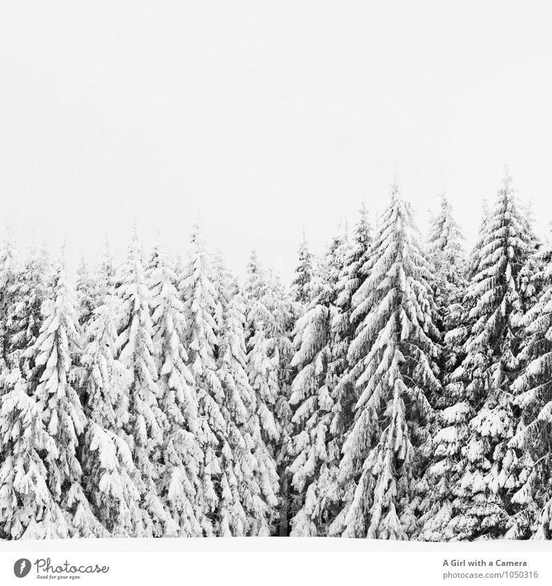 not just fleetingly so Environment Nature Landscape Plant Winter Bad weather Snow Tree Forest Cold Beautiful Covered Idyll Winter forest Black & white photo