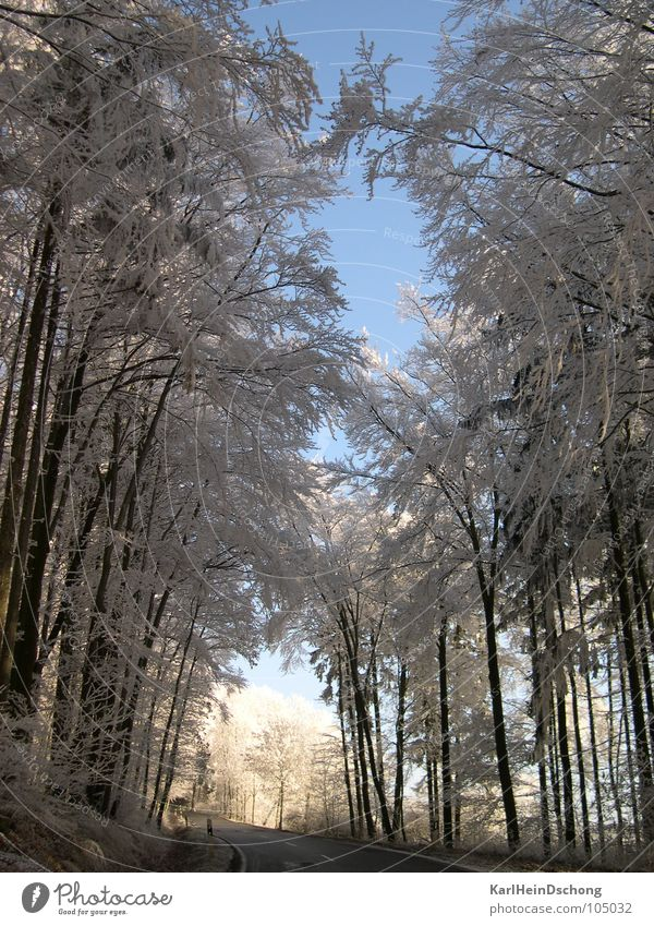 Icy path into the light Avenue Tunnel Tunnel vision Snow Tree Hoar frost Winter Frost Ice Street Light at the end of the tunnel Sun Good prospects White trees