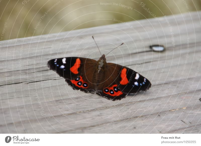 Nature Blue Beautiful Red Calm Animal Black Gray Wood Flying Wild animal Free Sit Esthetic Wing Touch