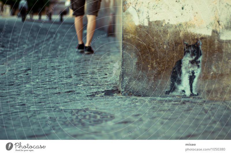 Cat Human being Man City Summer Animal Adults Wall (building) Street Graffiti Wall (barrier) Legs Masculine Dirty Design Tourism