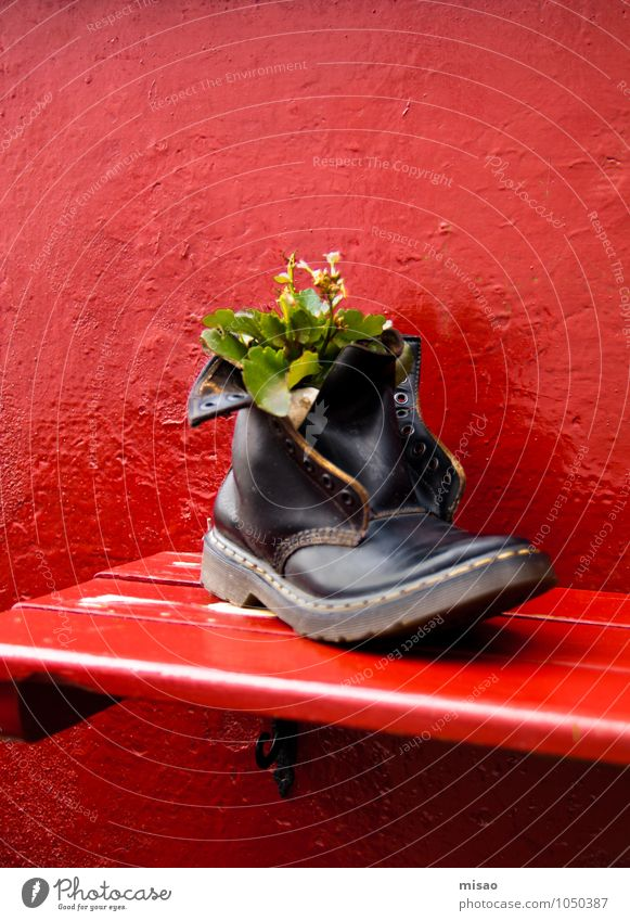Nature City Plant Green Beautiful Red Black Life Wood Small Art Exceptional Fashion Growth Success Footwear
