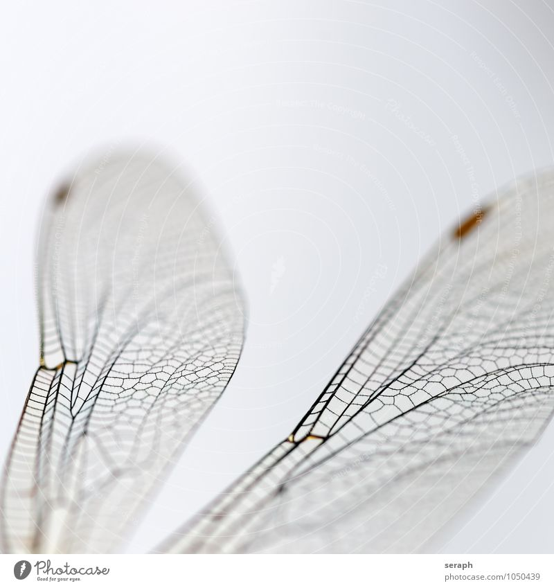 Dragonfly Insect Bug Flying Nature wildlife Animal Wing Living thing Close-up Macro (Extreme close-up) Fragile Transparent Chitin Environment Near fauna Natural