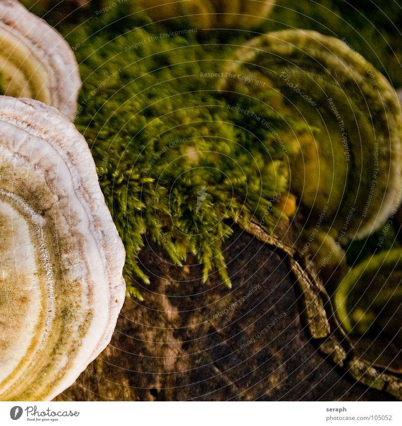 Environment Autumn Brown Ground Seasons Tree trunk Moss Mushroom Environmental protection Autumnal Tree bark Poison Woodground Mushroom cap Lichen