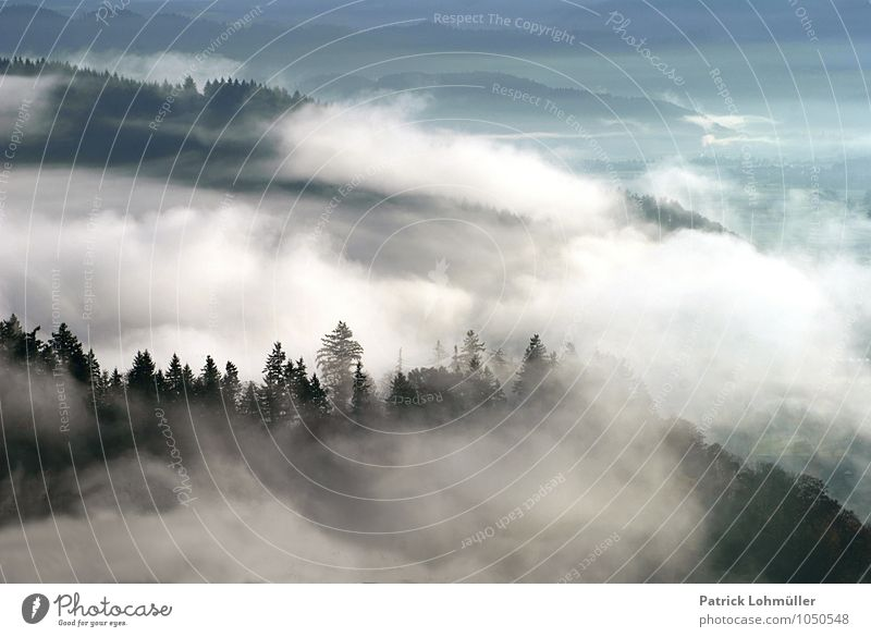 autumn fog Freedom Environment Nature Landscape Autumn Climate Fog Mountain Canton Freiburg Germany Baden-Wuerttemberg Europe Deserted Esthetic Exceptional