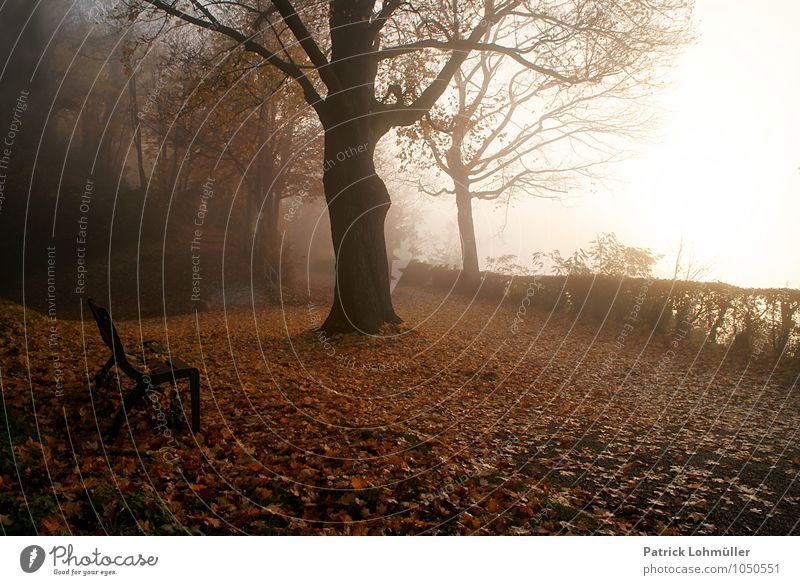 autumn mood Environment Nature Landscape Earth Autumn Weather Fog Forest Freiburg im Breisgau Germany Baden-Wuerttemberg Europe Esthetic Dark Moody Calm