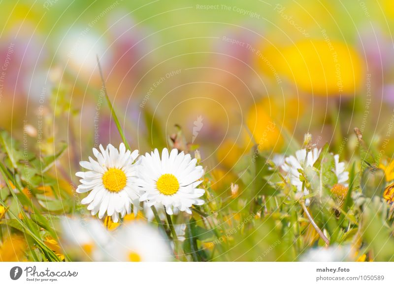 togetherness Nature Plant Spring Beautiful weather Flower Grass Wild plant Meadow Blossoming Fresh Happy Bright Small Yellow Green White