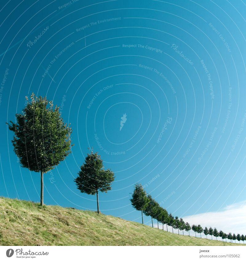 Sky Tree Green Blue Clouds Meadow Grass Garden Park Landscape Environment Arrangement Round Row Curve Blue sky