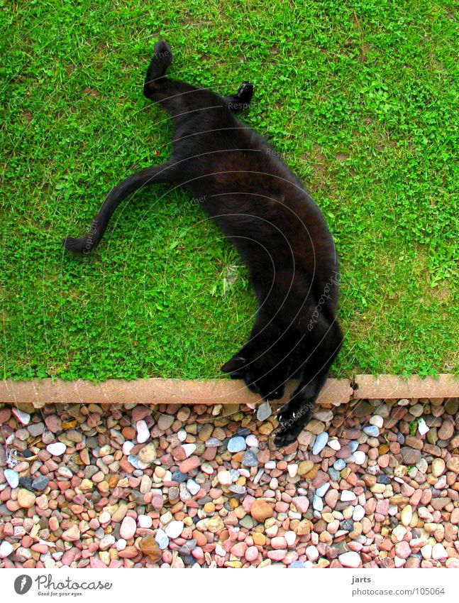 Animal Meadow Jump Playing Cat Sleep Traffic infrastructure Mammal Circus Acrobatics Salto Back handspring