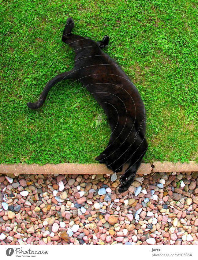 cat patches Cat Jump Salto Circus Meadow Playing Animal Sleep Mammal Back handspring Traffic infrastructure canoe jarts